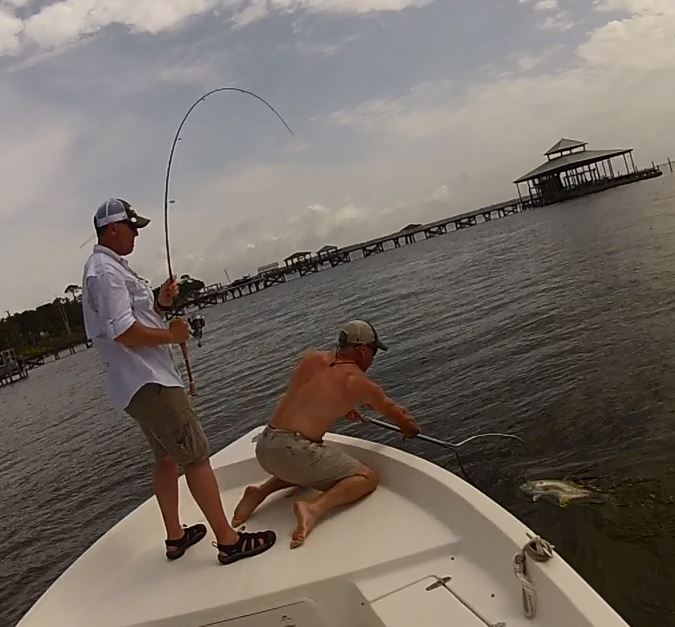 Jack Crevalle action