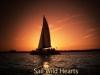 wild_hearts_sunset